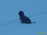 När vi kommit ner till isen, ville inte tika vända och åka tillbaka - trots blåst och snö!